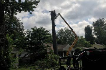 Full Service Tree Care