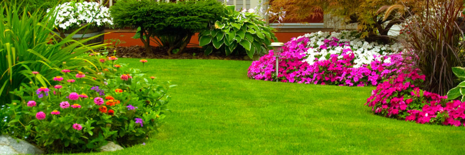 Landscaping installation and maintenance