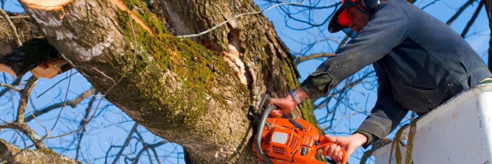 Arborist Services Since 2011