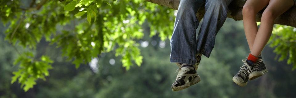 Healthy trees provide lasting memories