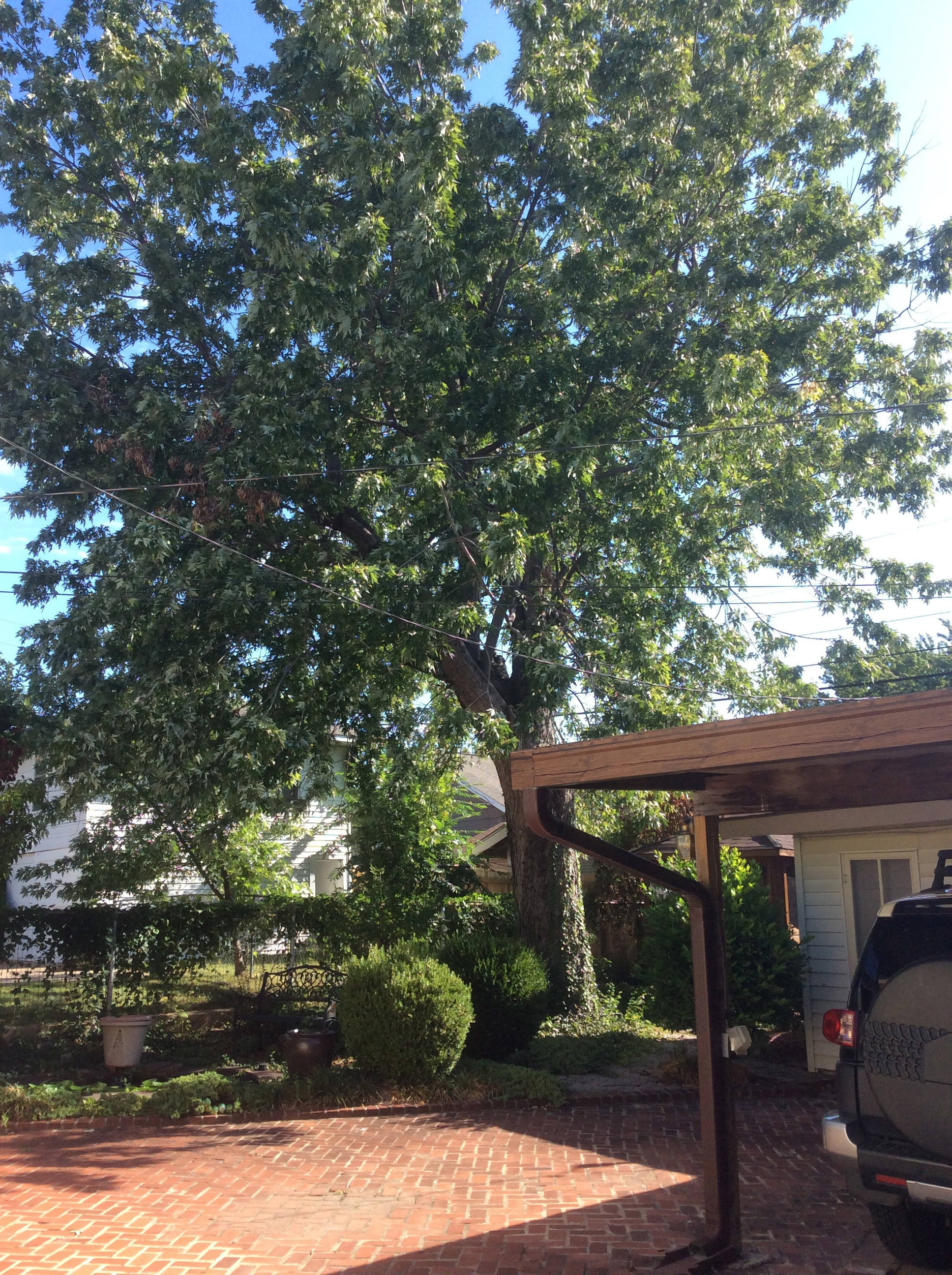 Tree services henderson tree and landscape for Tree and garden services