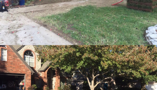 landscape services and sod installation
